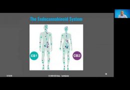 BACE Speaker Series -Dr. Caplan and the CBD and The Endocannabinoid System